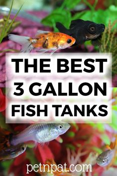 A 3 gallon fish tank makes a great addition to the home or office, or for a kids pet. The most important thing you need to know about small fish tanks is. Kids Aquarium, Aquarium Design, Aquarium Fish Tank, Aquarium Stand, Aquarium Ideas, Fish Tank For Kids, Small Fish Tanks, 3 Gallon Fish Tank, Community Fish Tank