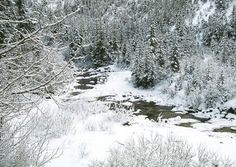 ELK CREEK   An icy cold stream winds its way through the frozen pines, a sign of holidays nearing. - See more at: http://greetingcardcollection.com/products/holiday-cards-nature-scenic/719-elk-creek