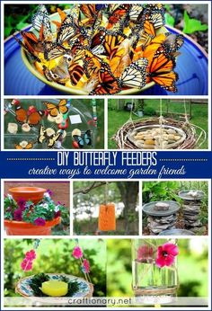Make butterfly feeder for garden (12 easy projects