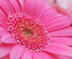 Lavendel Pflanzen Tipps Schneiden Pflegen Duftende Heilkraut ... Lavendel Pflanzen Tipps Pflege