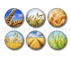 Wheat Magnets  Fridge Magnets  Nature Lover by ShakespearesSisters