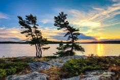 ***Sunset Pines (Killbear Provincial Park, Ontario) by Trevor Pottelberg Photography ( c.