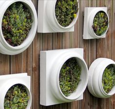 Pair Of Living Walls Comes Pre Planted And Ready To Hang Suitable For Indoor Outdoor Use