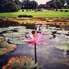 Lotus Flower <3