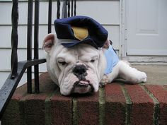Officer Wrinkles is ready to serve and protect (any yummy snacks you send his way :D)