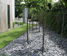 vertusmodern gardenlandscaping wonder if this would work with bamboo would have