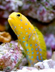Top 10 Easy Care Reef Safe Fish
