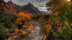 """AccuFan Weather Photo of the Day: Autumn Color in Zion National Park, UT, by  """"jeff fennell"""" 10/23/2013"""
