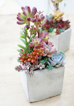 Cute Mini Succulent Pots And Planters Ideas Succulent Gardening, Succulent Terrarium, Container Gardening, Garden Plants, House Plants, Air Plants, Succulents In Containers, Cacti And Succulents, Planting Succulents