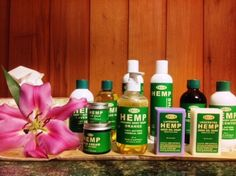 G.r.e.e.n Hemp skin and body care package. Contains lip balm, face cream, Unscented body lotion, massage oil, lavender lotion, seed oil, Unscented soap, lavender soap and hemp healing balm