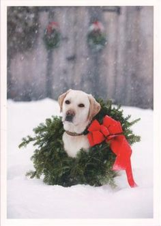 "Yellow Lab With Wreath Christmas Card, from Dogstuff.com. A great Christmas card for people and dogs alike. Features a yellow Labrador Retriever with a wreath around its neck in the snow. Inside reads: ""Warmest wishes for the Holidays"". Includes box of 10 (5 x 7 inch) cards and envelopes."