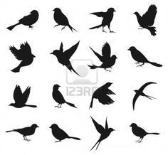 Set of silhouettes of birds Stock Photo - 15893671