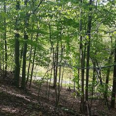Beautiful Lot in Candlewood Lake full of trees and with direct lake access from your back yard. You don't want to pass this up. Call me for more information. 740-262-1568  #morrowcounty #lovelifeliverural #candlewoodlake #mountgilead #mtgilead #bobmcelroyrealty #century21
