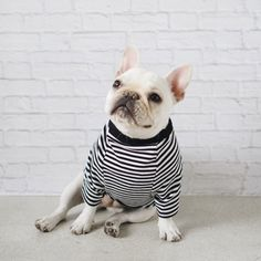 French Bulldog wearing Modern Dog Clothing and Accessories from Pipolli Pet Dogs, Dog Cat, Doggies, Dog Milk, Dog Clothes Patterns, Oui Oui, Dog Accessories, Cute Baby Animals, Dog Owners