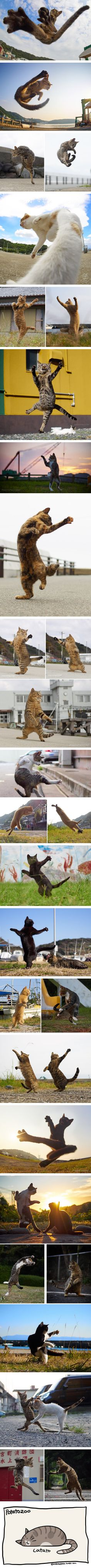 Purrfectly timed cat photos taken at the right meowment like they knew kungfu