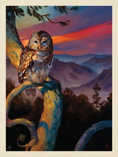 Anderson Design Group – The Kai Carpenter Collection – Shenandoah National Park: Barred Owl Envelope IconArrow DownRequired AsteriskRequired AsteriskRequired Asterisk American National Parks, National Parks Usa, Party Vintage, Voyage Usa, National Park Posters, Shenandoah National Park, Owl Pictures, Poster Prints, Art Prints