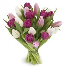 Sød tulipanhilsen