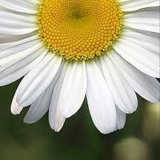 To the most beautiful woman with the beautifully flowered name - m4w