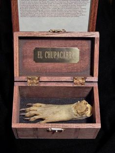 A genuine taxidermy Chupacabra foot. So either there is more than one Chupacabra, or the ol' goat sucker is down to three feet. Anyway, having this preserved foot will prove that I believed when no one else did. Think about that the next time your yard cat goes missing.