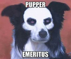 dog of the Punisher . Ghost Papa, Ghost Bc, Punisher, Funny Animal Photos, Funny Pictures, Badass Pictures, Ghost Pictures, Funny Animal Videos, Funny Animals