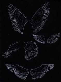 wings studies by FannyCl.deviantart.com on @deviantART