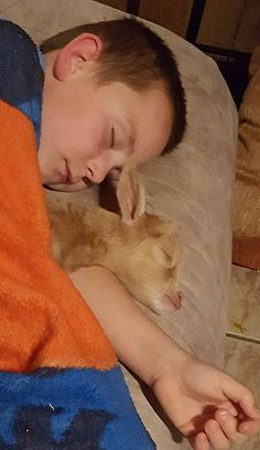 Short on Heaven - proud adga plus program memebers!is where your kids and animals are!Site was last updated: 3/03/2017Come follow us on facebook