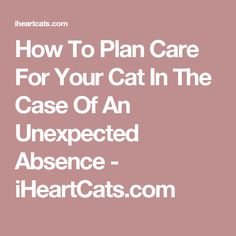 How To Plan Care For Your Cat In The Case Of An Unexpected Absence - iHeartCats.com