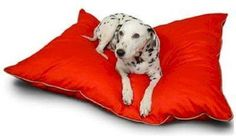 Majestic Super Value Dog Pet Bed Medium Green -- Click on the image for additional details. (This is an affiliate link and I receive a commission for the sales)