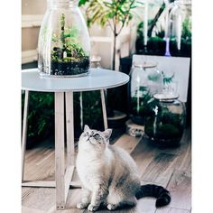 Moss in the jar from GreenBells. We really love their design- so does their cat!