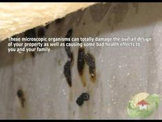 Mold In Bathroom Bad For Health mold removal contractor coral gables fl phone : 1-800-578-7038