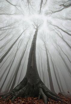 denlArt, Forest of Romania Andrei and Sergei Cosma
