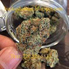 Quality buds/seeds/Oils #+1 (720) 523-5833 Hello, we are marijuana indoor growers with top quality cannabis strains in a great stock and at promotional offers, below are sample strains we have now!We also have other marijuana related products like cannabis oil,seeds, edibles and bongs. we offer Medical Marijuana Card for those who are interested. Only serious buyers should contact phone for more OG KUSH GIRLS SCOUT BLUE DREAM HASH OIL CBD oils WAX BANANA KUSH BLACKBERRY KUSH AFGHAN KUSH…