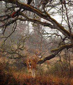 deer1132009JDM1healed by Hap Murphy, via Flickr