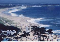 伊師浜海岸(いしはまかいがん) 日立市 コアジサシやハマチドリの営巣地、アオウミガメの産卵地となっている