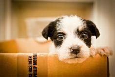 Si has perdido tu mascota, en Nuez te ayudamos a encontrarla. ¿Cómo? Con nuestro Seguro Mascota te damos hasta 300 euros por siniestro y año para que pongas anuncios en prensa. Así será más fácil encontrar a tu perro o gato. http://www.nuez.es/seguros/bienestar.html