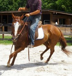 SNEAKER, rescued by Pure Thoughts Horse Rescue