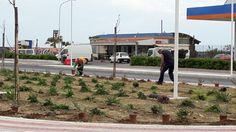 Termoli piantati 6mila nuovi cespugli sul lungomare nord