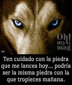 Think obout it. Wolf Quotes, Wisdom Quotes, Me Quotes, Positive Phrases, Motivational Phrases, Spanish Inspirational Quotes, Spanish Quotes, Simpsons Frases, Diva Quotes