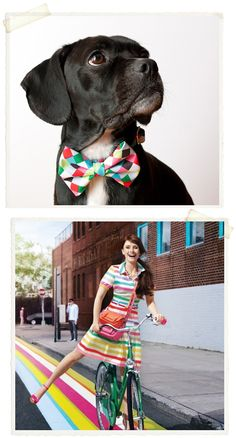 colorful.bowtie! #color #bowtie #pup