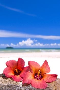 ☼ Life at the beach - white sand, blue sky, red flowers, Hibiscus