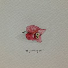 Day 28 : A year ago today, there were bougainvillea flowers everywhere. 18 x 13 mm. #365paintingsforants #watercolour #miniature #bougainvillea #flower (at Vredehoek)