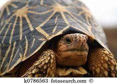Tartaruga Banco de Imagens e Fotos 24.316 tartaruga fotografias disponíveis para baixar em mais de 100 bancos de imagens.