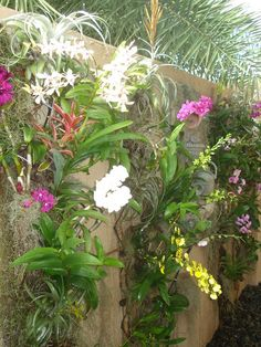 Orchid Wall - My work in progress but I will get here! Nature Plants, Cool Plants, Flowers Nature, Air Plants, Orchids Garden, Orchid Plants, Exotic Plants, Beautiful Gardens, Beautiful Flowers