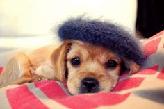 Bonnie's Beret. Because dogs like hats just as much as cats.