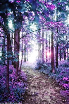 Lovely violet path