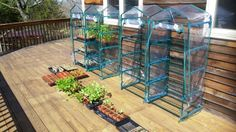 May 1: Moving indoor greenhouses outdoors today!! Heirloom seeds doing very well! #Preppertalk