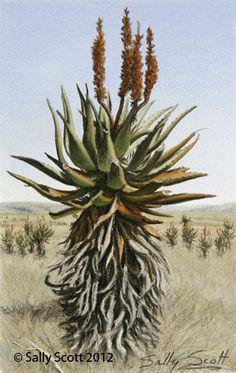 Original Sally Scott painting Aloe in the Veldt #3