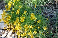 Rock-Oak-Deer blog showcases native plants in the October garden.