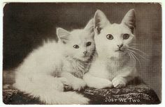 Antique Images: Vintage Animal Graphic: Cat Clip Art of Cat and Her Kitten on Vintage Postcard