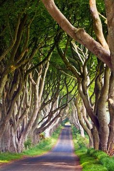 Also known as The Dark Hedges, Bregagh Road in Ballymoney, Ireland is canopied by tall beech trees dating back to the 18th century.